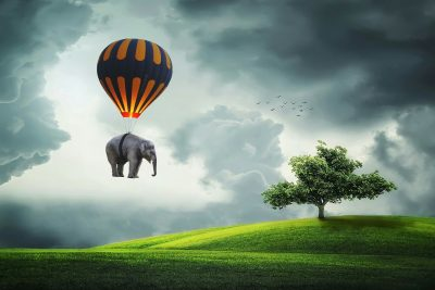 elephant-3458033_1920